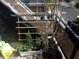 Rankhilfe Holz Selber Bauen : rankhilfe selber bauen aus bambusst ben ~ Watch28wear.com Haus und Dekorationen