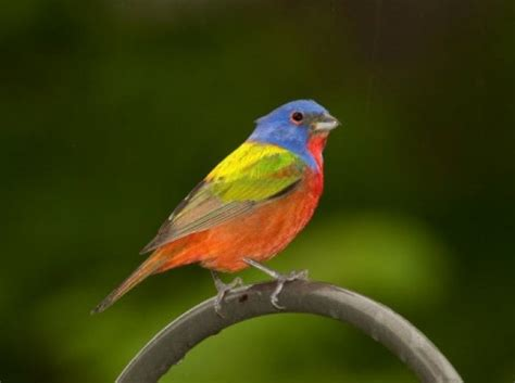 south carolina birds identification guide book covers