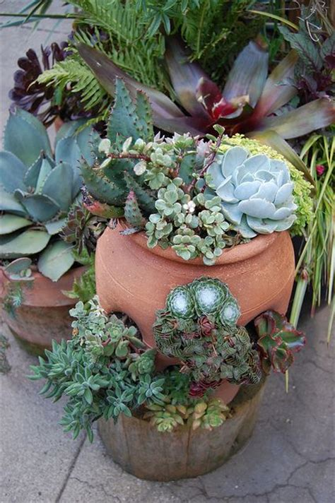 succulent containers succulent container dream gardens pinterest gardens planters and succulent containers