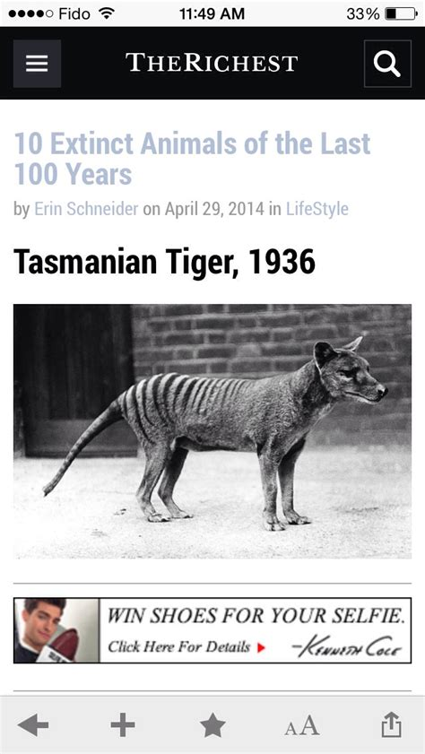10 Extinct Animals Of The Last 100 Years Musely