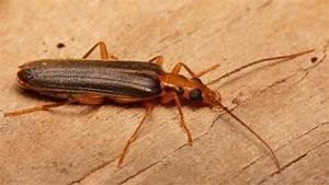 Insecte Qui Mange Le Bois : l 39 insecte du bois ~ Farleysfitness.com Idées de Décoration