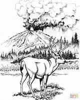 Deer Coloring Mule National Lassen Volcanic Printable Adult Sheets Wood Supercoloring Patterns Burning Hunting Animals Drawing Animal Detailed Drawings Parks sketch template