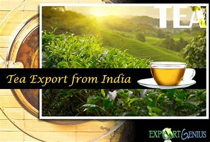Tea Export India Suppliers
