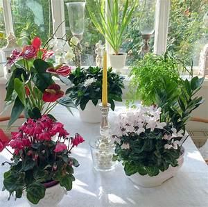 Schädlinge Zimmerpflanzen Klebrige Blätter : meine top 10 zimmerpflanzen ploberger ~ Lizthompson.info Haus und Dekorationen