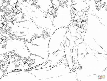 Coloring Fox Pages Realistic Gray Sitting Drawing
