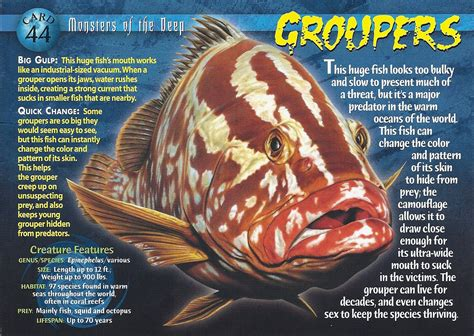 grouper sea fish serranidae groupers number classification deep monsters animal scientific bass kingdom any classifications lower card higher order basses