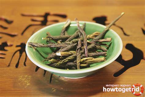 Kudina tēja - ieguvumi un kaitējums veselībai