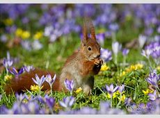 Vorfreude auf den Frühling Tiere VIEW Fotocommunity
