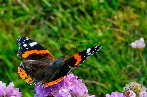 Grasgeflüster Schmetterlinge Im Herbst 2013