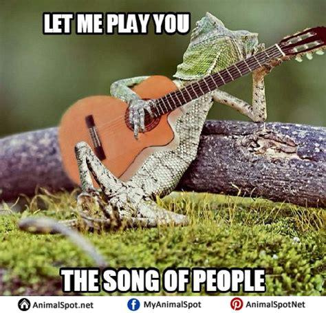 Lizard Meme - lizard memes