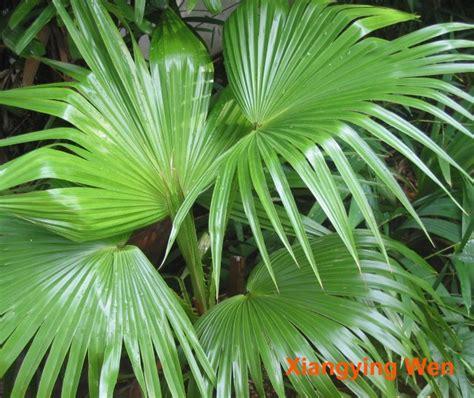 index  floradataimagesarecaceae