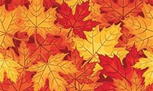 Feuilles D Automne à Imprimer : coloriage feuilles d 39 automne sur ~ Nature-et-papiers.com Idées de Décoration