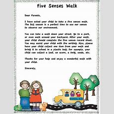 17 Best Images About Five Senses On Pinterest  The Five, Preschool And Human Eye