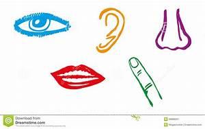 Five Senses Icon Set - Vector Stock Illustration - Image ...