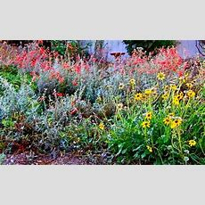 1000+ Images About California Native Garden Ideas On