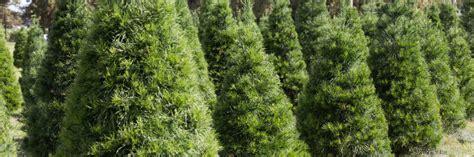 hughes christmas tree farm