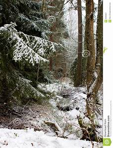 Mystic winter forest stock image. Image of snow, forest ...