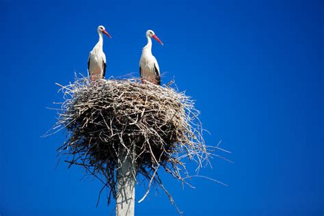 Bird Nests: How Did They Evolve? | Nature World News
