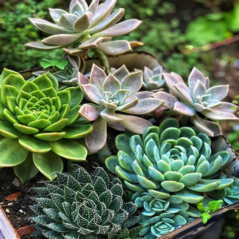 Requirements to care a succulent - Succulents.today