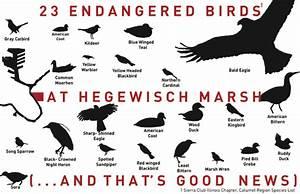 ક્ષીઓની ટતી તી ંખ્યા. Endangered Bird List. 576x373px ...