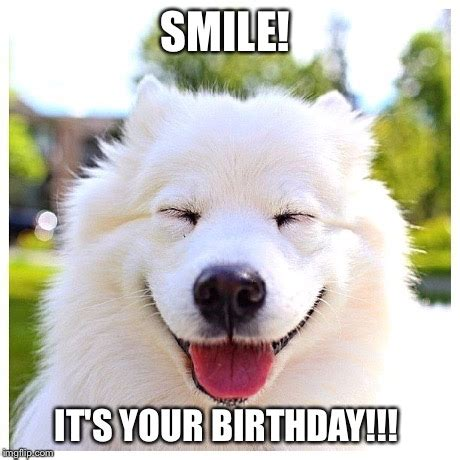 Dog Birthday Memes - image tagged in smile birthday happy birthday dogs dogsmile2 smiley imgflip