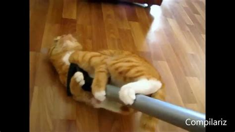 Cats Love Vacuum Cleaners Compilation Gatos Youtube