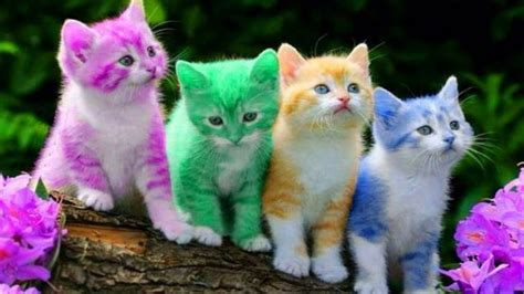 cat colors kitten cat colorful learning color for