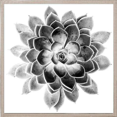 natural curiosities black  white succulent