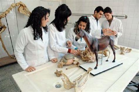 bombay veterinary college bvc mumbai admissions