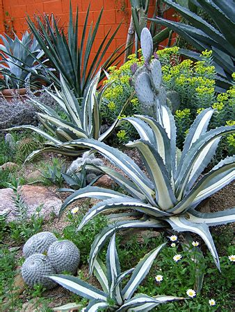 tips  desert landscaping  arizona arizona real estate notebook