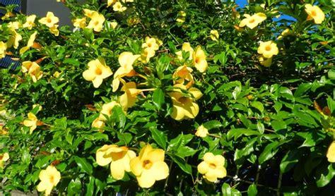 jenis tanaman hias tahan panas matahari bibit