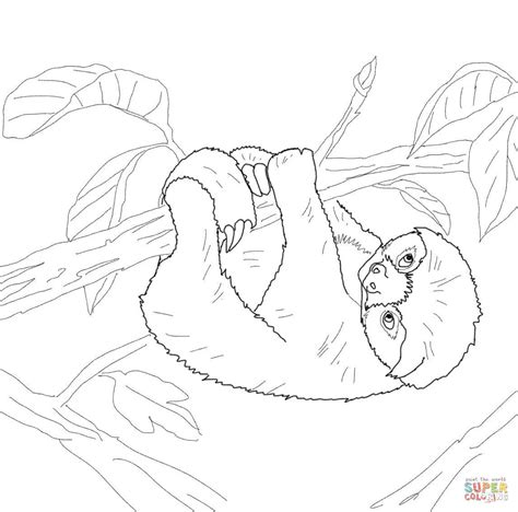 baby sloth coloring page  printable coloring pages