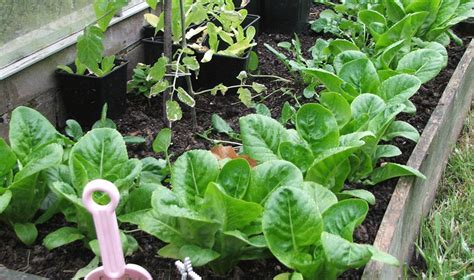 Vegetables To Grow Over Winter