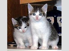 Katzen Katzenkinder auf der Suche nach tollen Spielen