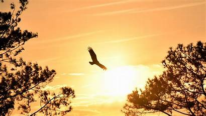 Eagle Flying Sky 4k Sunset Wallpapers During
