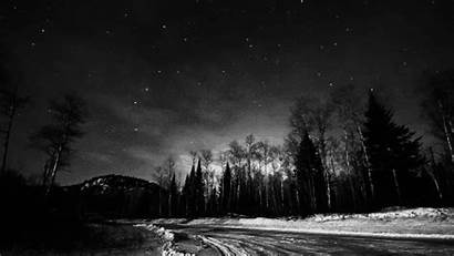 Forest Dark Night Sky Nature Trees Gifs