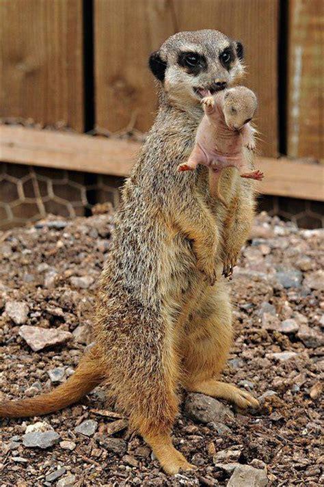 animals   neck images  pinterest