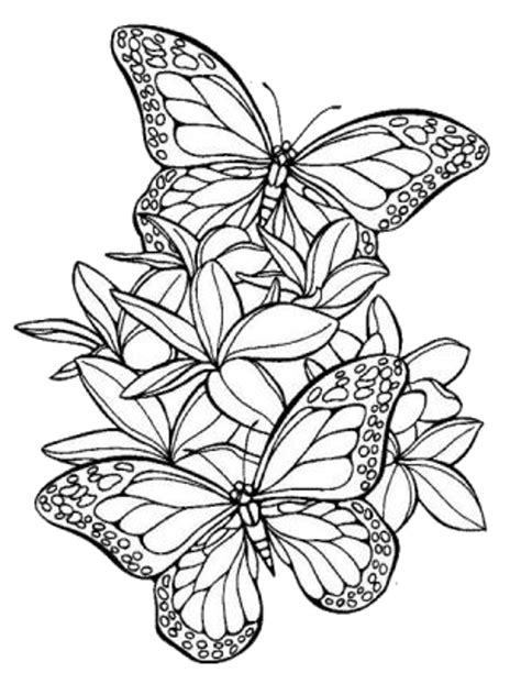 foto bff disegni da colorare 10 disegni di farfalle da colorare