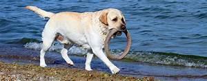 Foehr ferienhaus mit hund