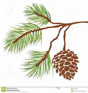 Drawn fir tree pine needle - Pencil and in color drawn fir ...