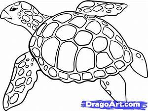 How to Draw a Sea Turtle, Step by Step, Sea animals ...