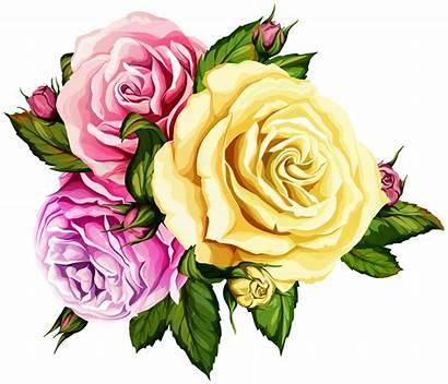 Roses Transparent Clipart Yopriceville Label Rosas