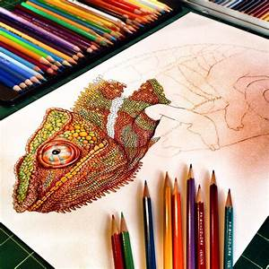 Progress Picture  3 Of My Colored Pencil Drawing Of Chameleon  Prints Of My Many Animal Drawing
