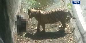 White Tiger Kills Young Man At Delhi Zoo | HuffPost UK