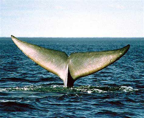 las mejores fotos de ballenas imagenes de ballenas
