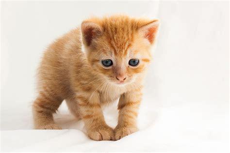 Opvoeden kitten