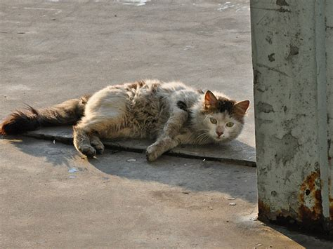 How To Care For A Stray Cat