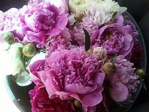 Stardust Designs: Pretty Peonies