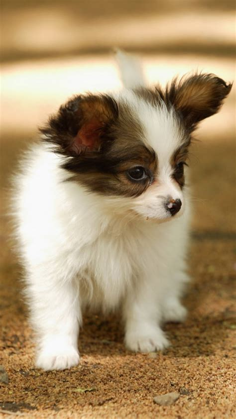 Desktop hd backgrounds of dogs. 60 Cute Animals iPhone Wallpapers You Would Love to Download