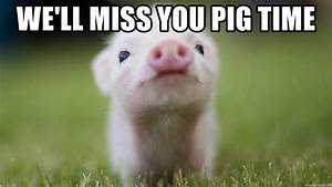 We Will Miss You : we 39 ll miss you pig time cute pig meme generator ~ Orissabook.com Haus und Dekorationen